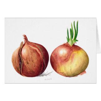 Cartão Cebolas - pintura botânica do Watercolour