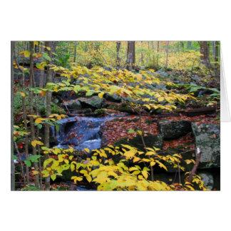 Cartão Cena da floresta do outono