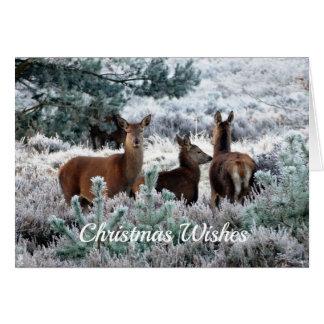 Cartão Cena dos cervos do inverno