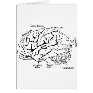Cartão Cérebro humano