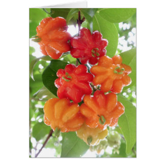 Cartão Cerejas de Suriname