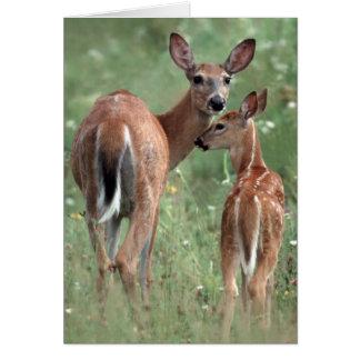 Cartão cervos Branco-atados com jovem corça