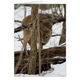 Cartão Cervos de Whitetail na neve