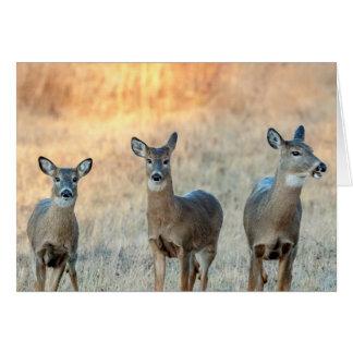 Cartão Cervos em um campo