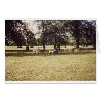 Cartão Cervos no parque de Richmond