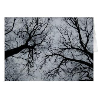 Cartão Céu de novembro através da fotografia das árvores