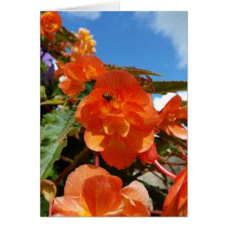 Cartão céu, flores e abelha