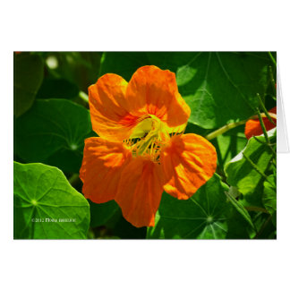Cartão Chagas na laranja