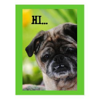 Cartão chinês do cão do Pug olá!