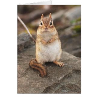 Cartão chipmunk gordo & macio adorável