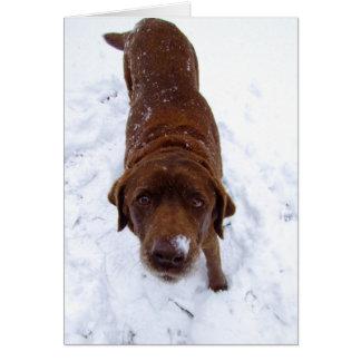 Cartão Chocolate Labrador na neve