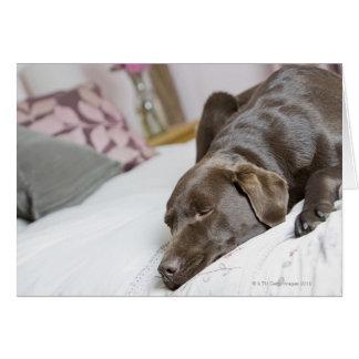 Cartão Chocolate Labrador que dorme na cama
