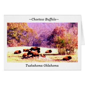 Cartão ~Choctaw Buffalo~