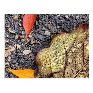 Cartão chuvoso das folhas