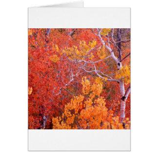 Cartão Cidade das árvores de Aspen do outono das rochas