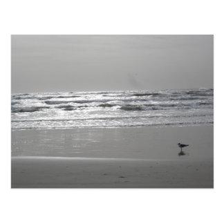 Cartão cintilando das ondas