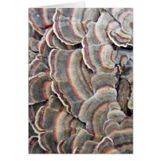 Cartão Cinzas e ondinhas dos fungos de Borgonha