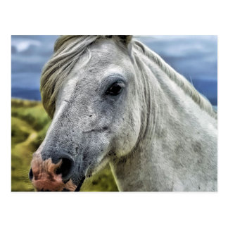 Cartão cinzento do cavalo cartão postal