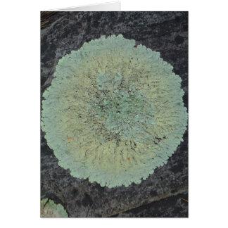 Cartão Círculo Mossy do líquene