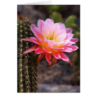 Cartão Círio no rosa