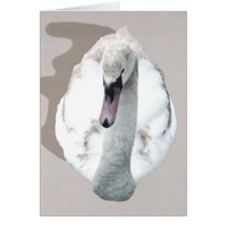 Cartão Cisne