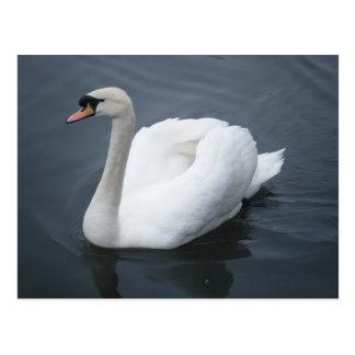 Cartão - cisne