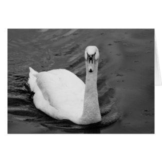 Cartão Cisne curiosa