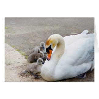 Cartão Cisne e seus bebês