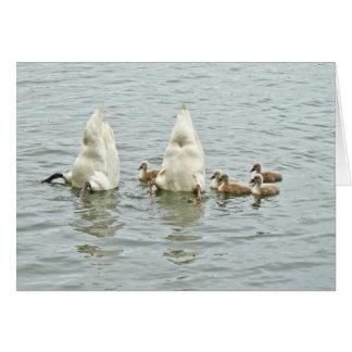 Cartão Cisne muda Famly