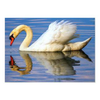 Cartão Cisne muda, olor do cygnus