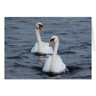 Cartão Cisnes no amor