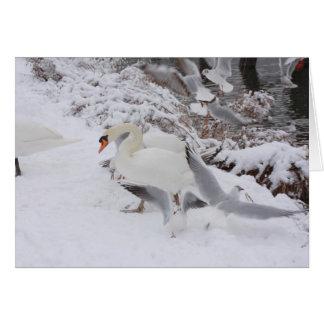 Cartão cisnes pelo beira-rio nevado