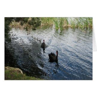 Cartão Cisnes pretas, Perth