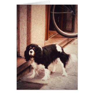 Cartão clássico do vazio do cão