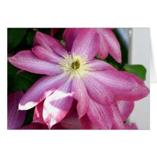 Cartão Clematis cor-de-rosa brilhante
