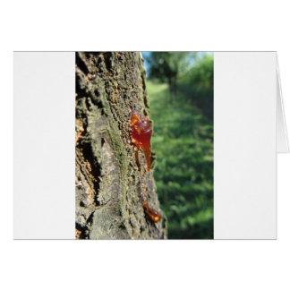 Cartão Close up da excreção da árvore de pera da resina