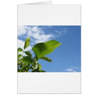 Cartão Close up da folha da noz iluminado pela luz solar