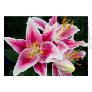 Cartão Close up oriental do lírio na flor completa