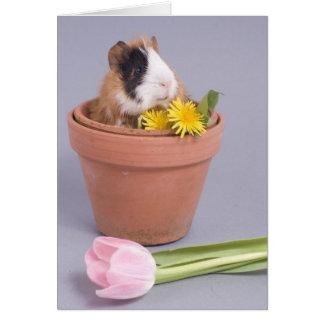 Cartão cobaia em um flowerpot