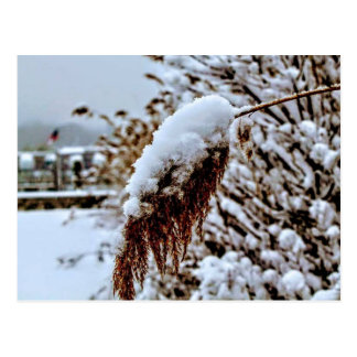 Cartão coberto de neve do cumprimento do junco