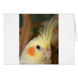 Cartão Cockatiel Cutie