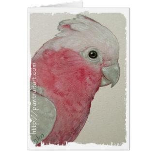 Cartão - Cockatoo