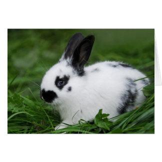 Cartão Coelho de coelho inglês do bebê bonito - animais