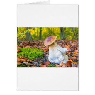 Cartão Cogumelo comestível do porcini no assoalho da