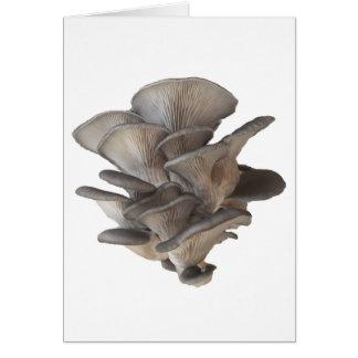 Cartão Cogumelo de ostra