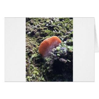 Cartão Cogumelo tormentoso da explosão dos Mycelia