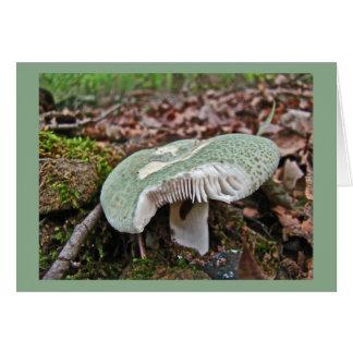 Cartão Cogumelo verde - crusosa do Russula