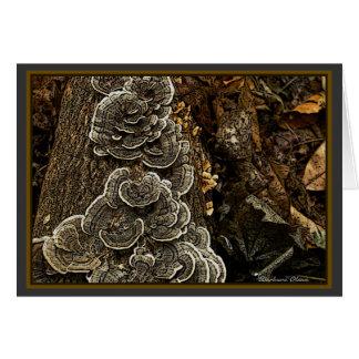 Cartão cogumelos