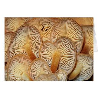 Cartão Cogumelos alaranjados de Mycena