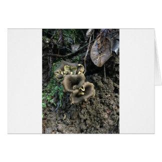 Cartão Cogumelos de florescência